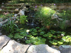 water garden for Feb 2018