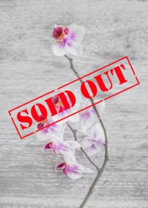 Orchid on wooden background with Sold Out Stamp